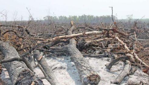 deforestation_may-titthara