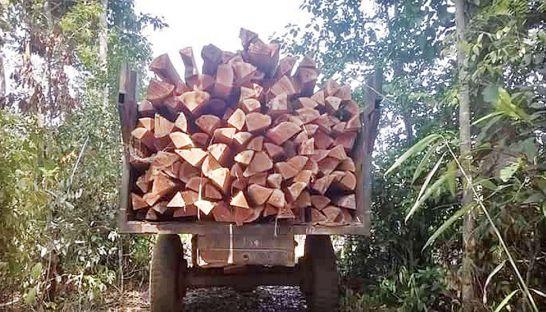 timber_0