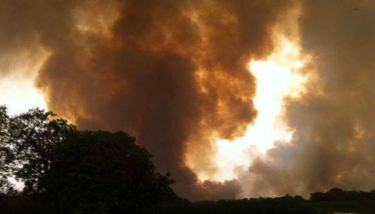 fire_in_battambang_that_destroyed_bird_habitat_27_04_2016_wcs_cambodia