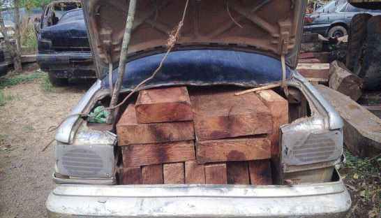 illigal_timber_sits_the_truck_of_a_car_friday_after_it_was_seized_by_authorities_in_ratanakkiri_province_06_05_2016_supplied