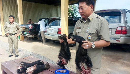 a_forestry_official_holds_the_limbs_of_a_sun_bear_yesterday_in_banteay_meanchey_after_they_were_seized_from_a_woman_at_a_thai-cambodia_border_checkpoint_18_07_2016_wildlife_alliance