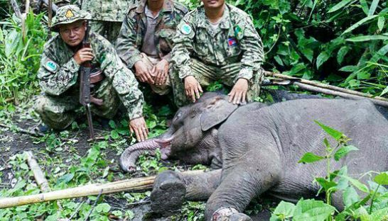 authorities_with_baby_elephant_that_was_killed_in_mondulokiri_00_07_2016_supplied