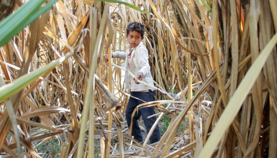 phnom_penh_sugar_kampong_speu_06_03_2014_vireak_mai