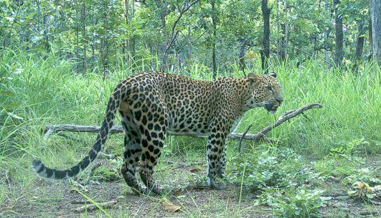 a-leopard