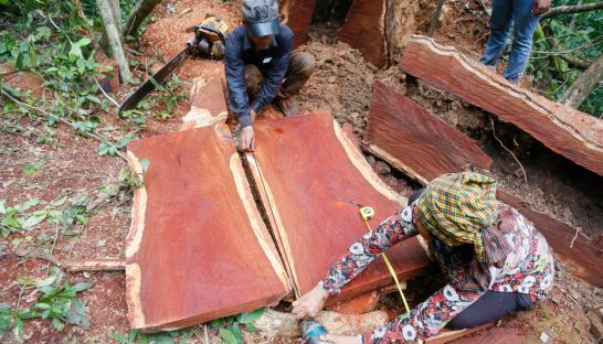 illegal_loggers_prepare_to_trim_rosewood_into_a_plank_in_oddar_meancheys_dangrek_mountains_on_the_thai-cambodian_border_in_2014_09_08_2016_heng_chivoan