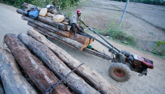 a_man_transports_a_trailer_load_of_timber_through_kratie_province_toward_the_cambodia-vietnam_border_earlier_this_year_30_05_2016_pha_lina