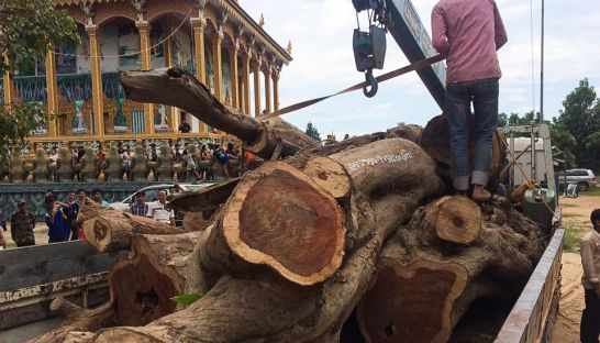 pieces_of_a_rosewood_tree_are_unloaded_at_a_siem_reap_pagoda_yesterday_after_the_apsara_authority_felled_it_earlier_in_the_week_09_11_2016_supplied