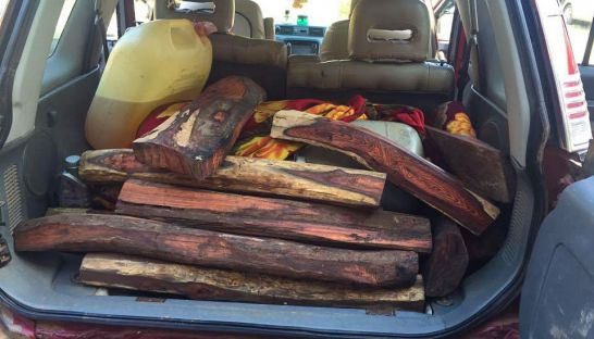 rosewood_sits_in_the_back_of_a_vehicle_yesterday_in_ratanakkiri_province_after_it_was_seized_my_authorities_27_11_2016_supplied