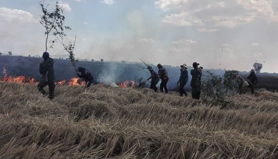 12_villagers_attempt_to_extinguish_a_fire_in_a_rice_field_in_banteay_meanchey_province_on_sunday_authorities_estimate_that_17_hectares_of_rice_fields_were_accidentally_set_on_fire_25_12_2016_suppl