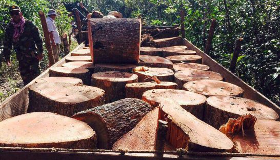 confiscated_luxury_wood_sits_on_a_trailer_in_a_section_of_forest_in_kampong_thom_province_yesterday_after_it_was_seized_by_authorities_30_11_2016_forestry_administration