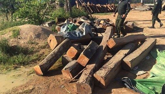 Authorities inspect some of the timber seized from the warehouse of a military official was raided in Kampong Speu last week. Photo supplied.