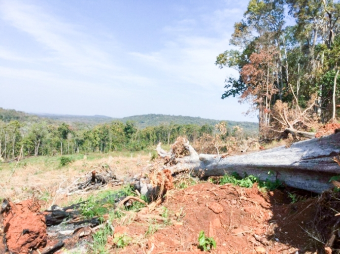 Trees lie uprooted in a cleared part of the protected forest. Supplied