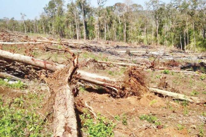 State-owned forestland that was allegedly cleared by a Mondulkiri official illegally for his own farming purposes. Photo supplied