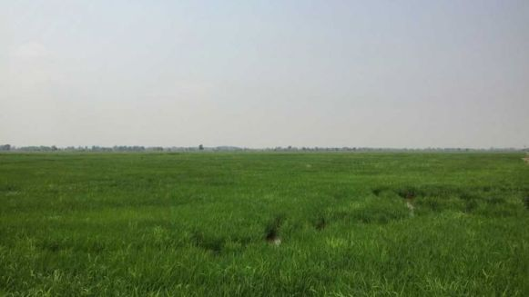 rice_fields_in_kandal_stung_districts_kandork_commune_that_are_set_to_become_part_of_a_large_airport_development_announced_by_the_government_in_january._daphne_chen